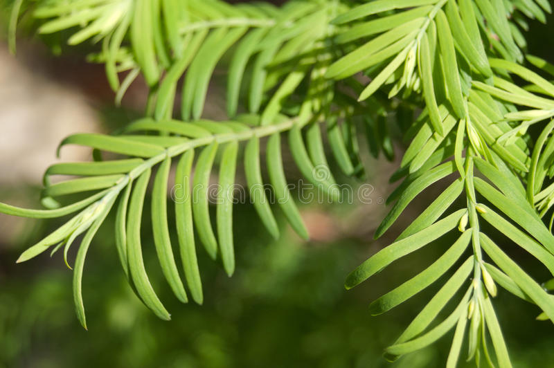 Download Branches of Tree stock image. Image of branches, freshness - 30789805