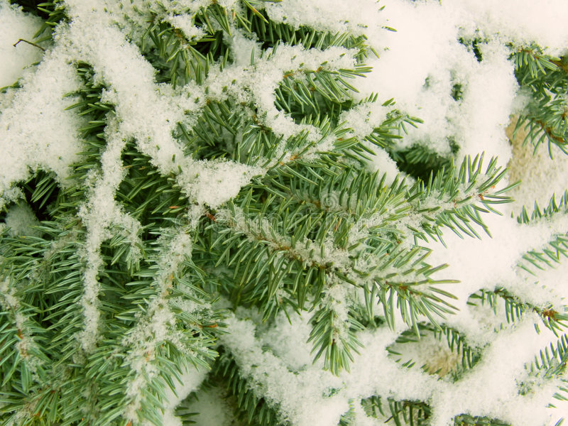 Download Branches Of A Tree A Fur-tree Stock Image - Image: 7289555