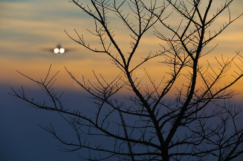 Branches of tree, plane landing in background royalty free stock photography