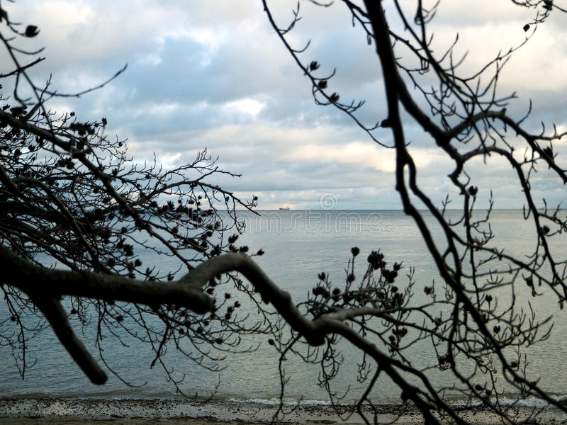 Download The Branches Of The Tree And The Sea Stock Photo - Image: 83704230