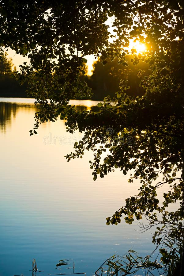 Branches of trees against the background of a sunset. Over the lake stock photography