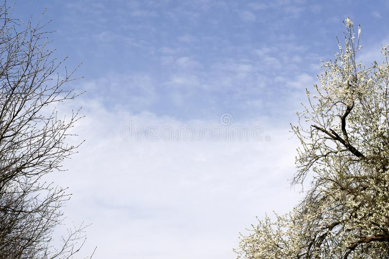 Branches of trees against the blue sky. Beautiful green park on the sky background. royalty free stock photo