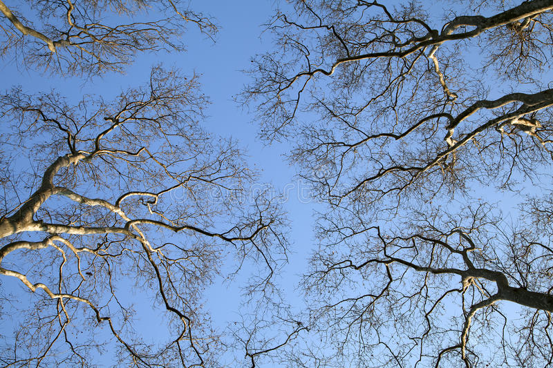 Download Spring trees stock photo. Image of non, twig, urban, frame - 30277284