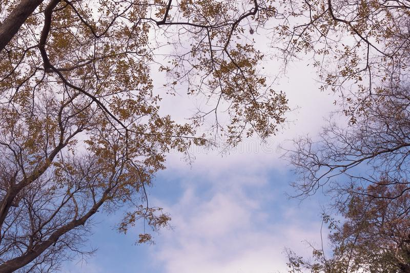 Branches of trees on the background of the sky. Branches of trees with leaves on the background of the sky royalty free stock photography
