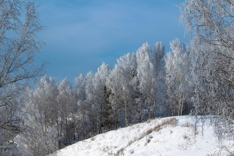 Winter forest on a steep cliff. stock images