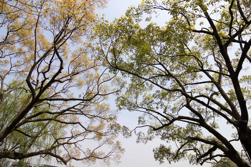 Branches of Trees. Image of branches of trees with blue sky in background stock photography