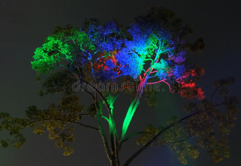 The branches of a tropical tree are illuminated by colorful lanterns at night.  stock image