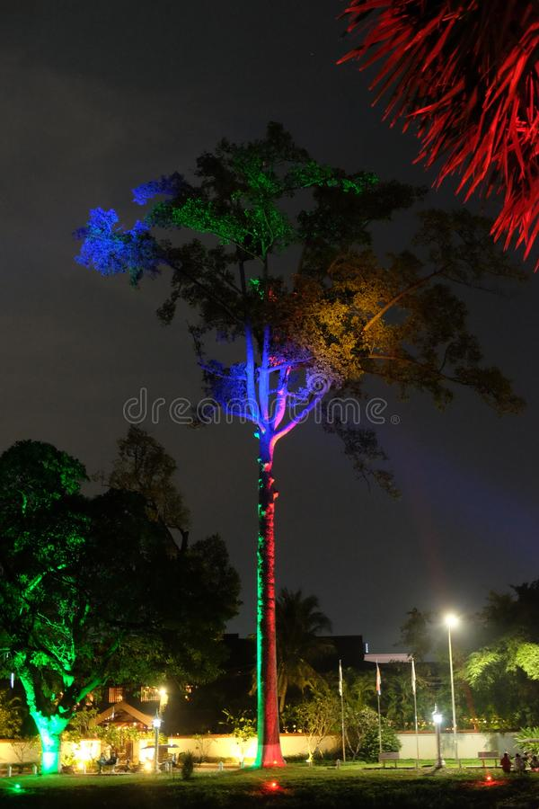 The branches of a tropical tree are illuminated by colorful lanterns at night.  royalty free stock photography