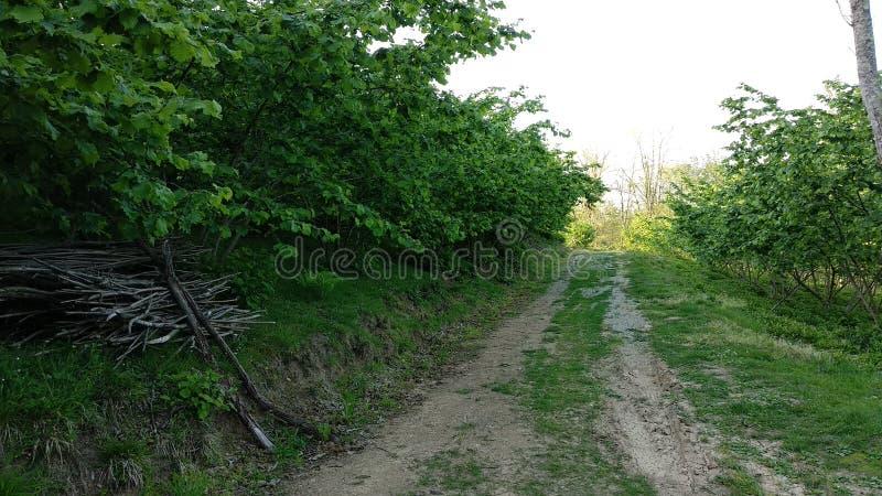 Branches tussen hazelnootbomen royalty-vrije stock fotografie