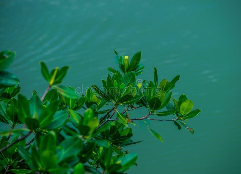 Branches vertes feuillues au-dessus d'une voie d'eau de Miami photographie stock libre de droits