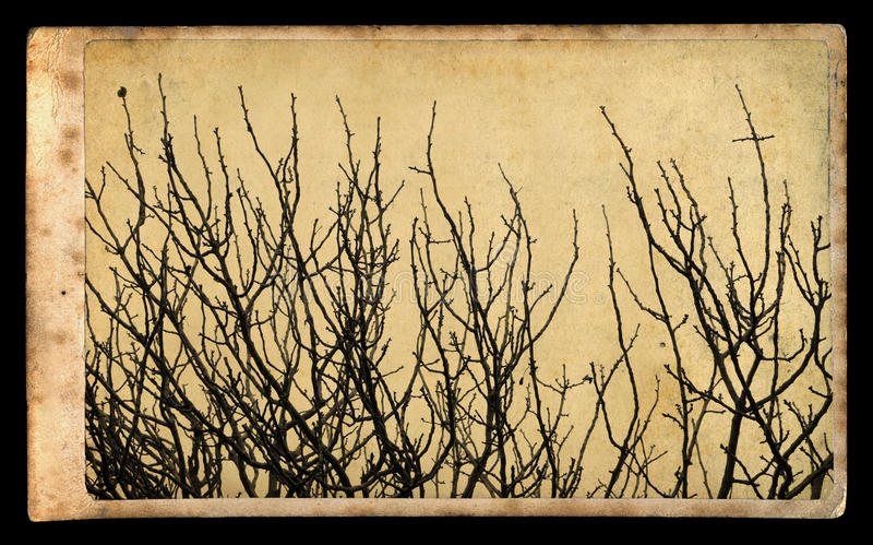 Branches on vintage photo paper royalty free stock image