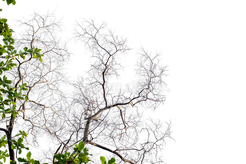 Branches on a white background stock images