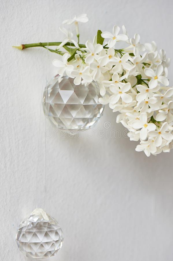 Branches of white lilac.Natural wealth. On a white background with round lenses. stock photos