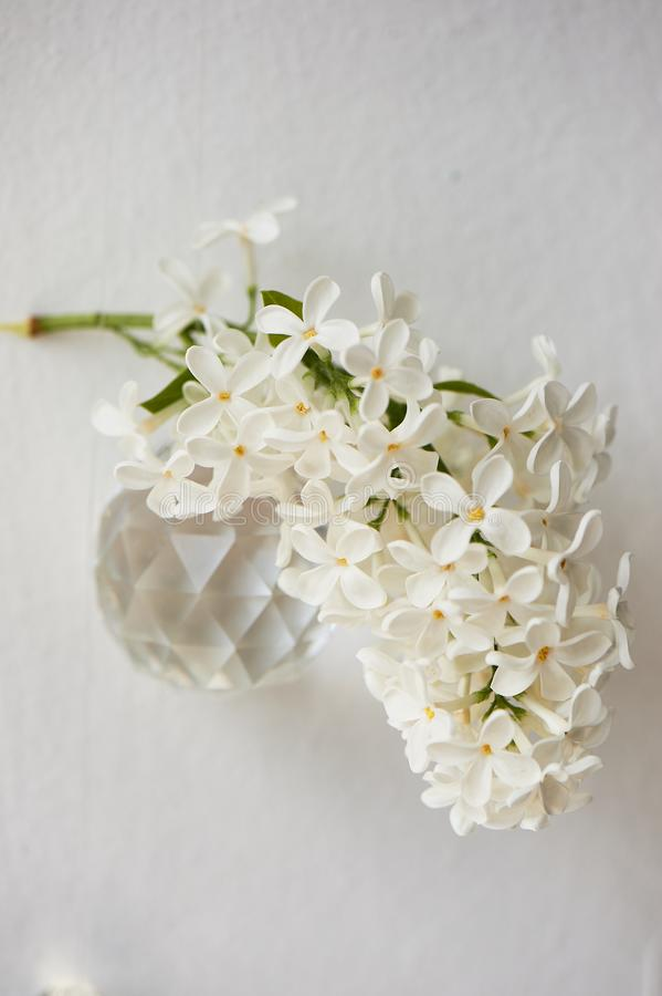 Branches of white lilac.Natural wealth. On a white background with round lenses. royalty free stock photo