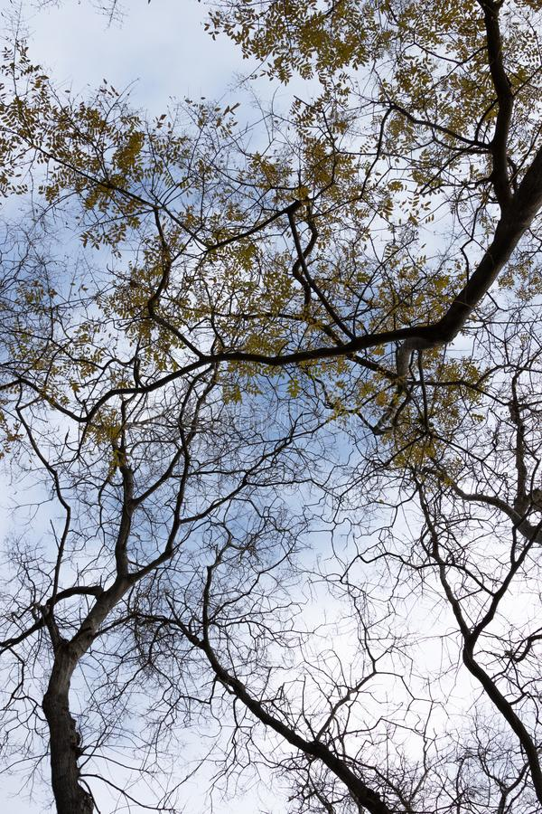 Yellow leaves and dry branches of trees on the background of the sky. Branches with yellow leaves and dry branches of trees on the background of the sky royalty free stock images