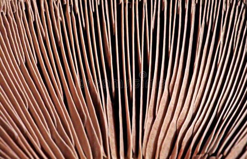 Branchie del fungo fotografia stock