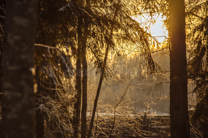 Branchs and trees in snow road_4 royalty free stock photography