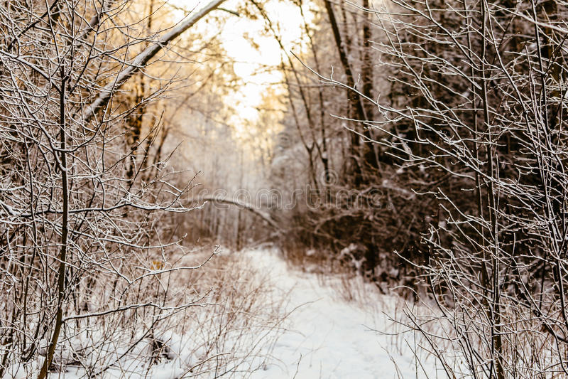 Branchs and trees in snow road3 royalty free stock photos