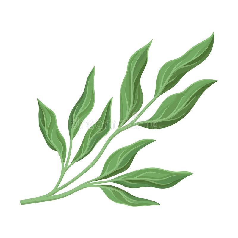 Branchy stem with leaves. Vector illustration on a white background. Branchy stem with green peony leaves. Vector illustration on a white background vector illustration