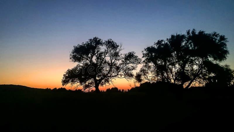Branchy träd för magisk färgrik solnedgångkontur arkivfoto
