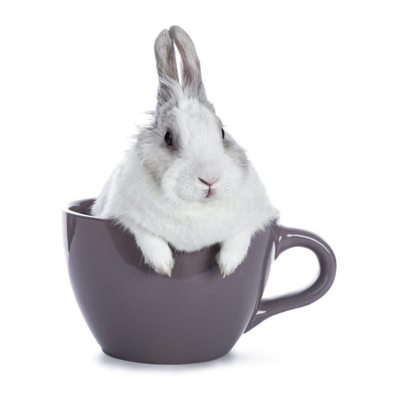 Branco bonito com coelho cinzento imagem de stock