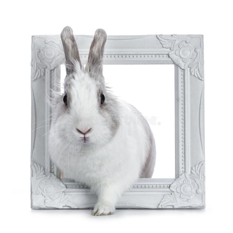 Branco bonito com coelho cinzento fotografia de stock royalty free