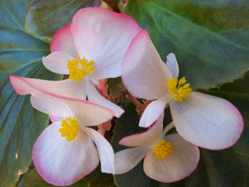 Branco da flor foto de stock royalty free