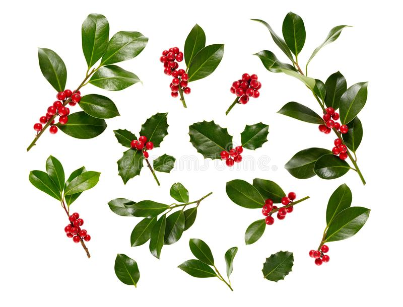Branco de Holly With Red Berries On do Natal imagem de stock