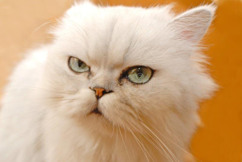 Branco do gato fotos de stock