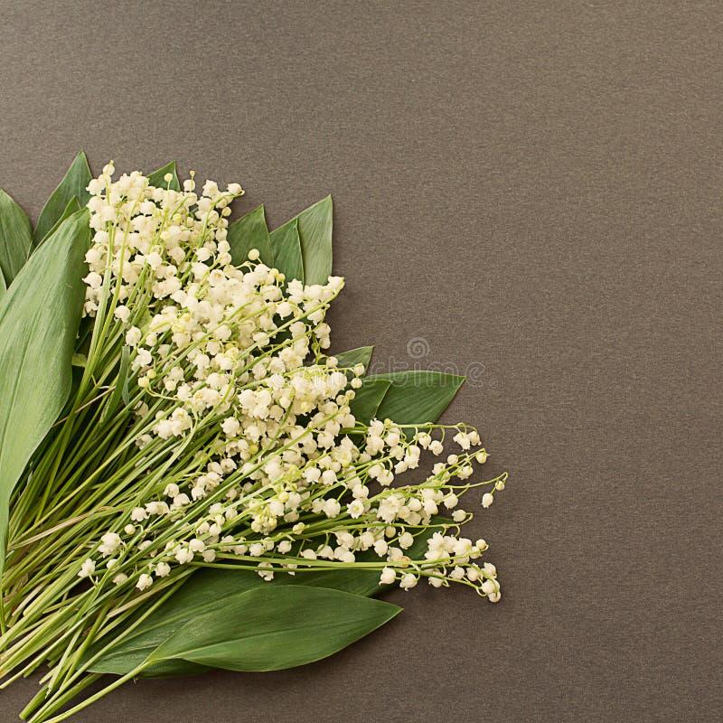 Branco do lírio---vale do ria do ¡ de Convallà na obscuridade - fundo cinzento foto de stock