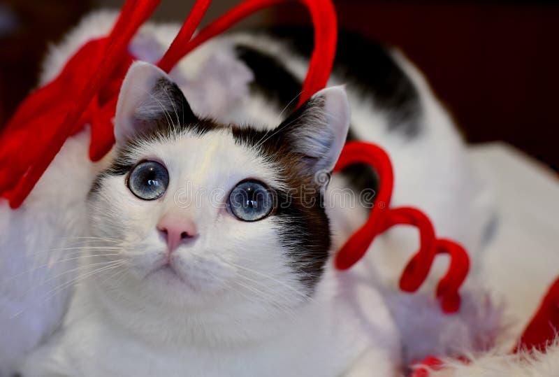 Branco do Natal e gato de Brown foto de stock royalty free