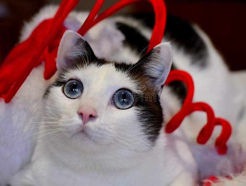 Branco do Natal e gato de Brown fotografia de stock royalty free