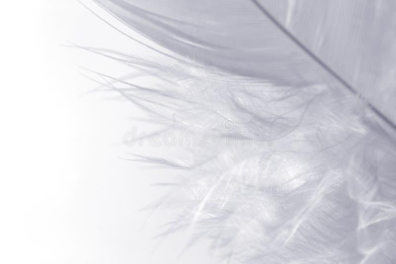 Branco no branco fotografia de stock royalty free