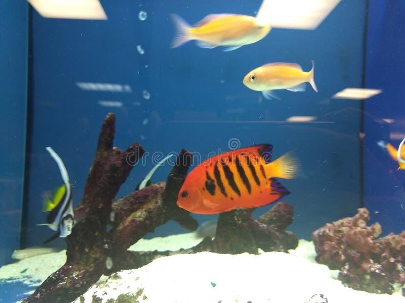 Brand Angel Fish royalty-vrije stock fotografie