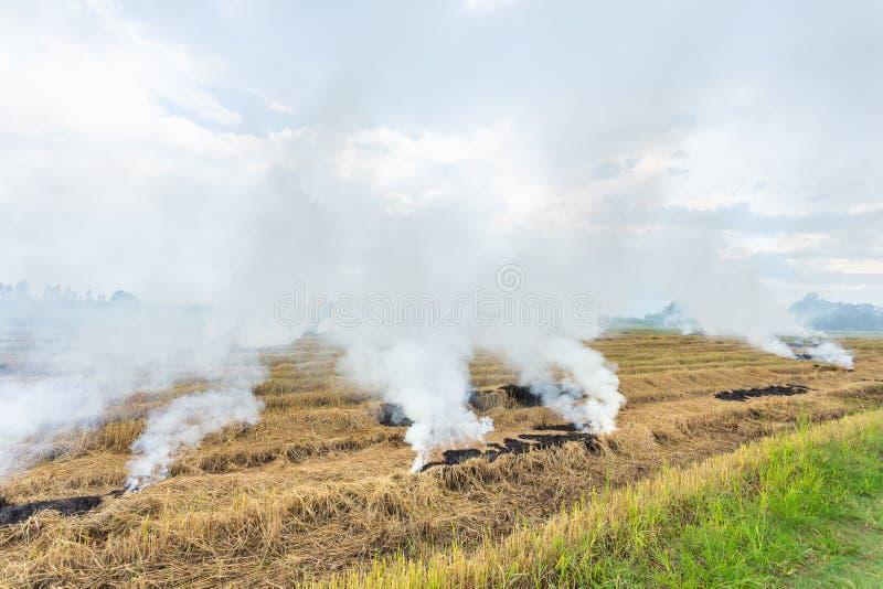 Brand die droog rijststro op het gebied branden stock foto's