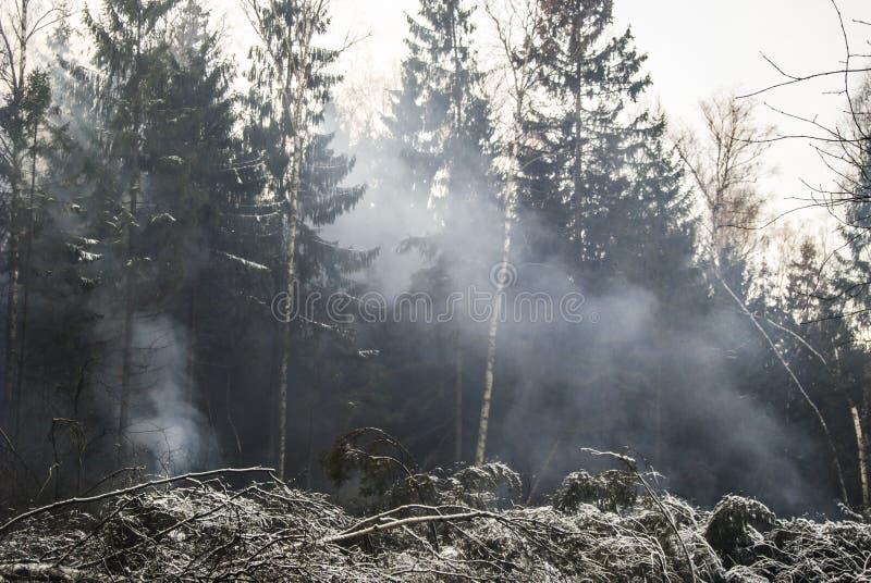 Brand in het bos in de winter het bos brandt Gevaarlijke Situatie stock afbeelding