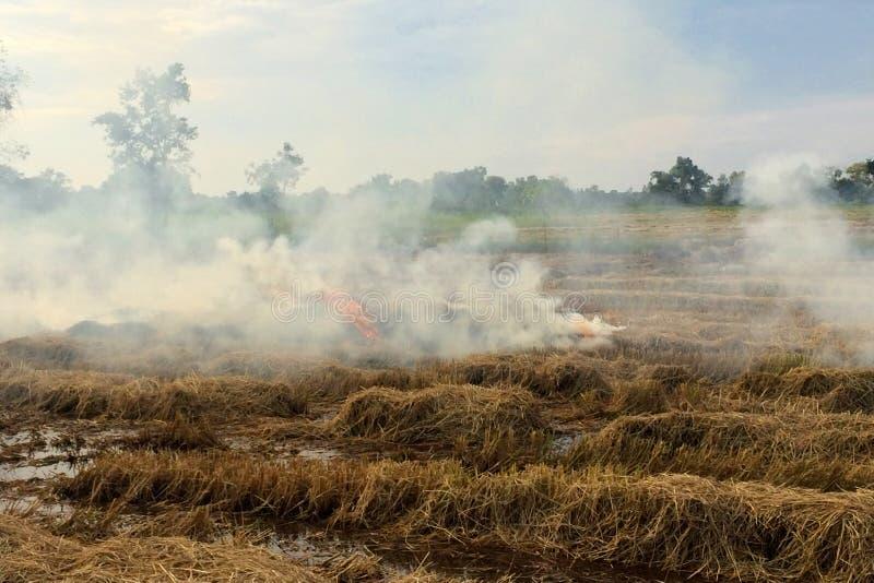 Brand het branden de cultuur van het rijststoppelveld royalty-vrije stock afbeeldingen