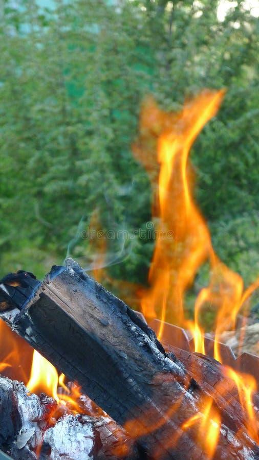 Brand i en skog arkivfoton