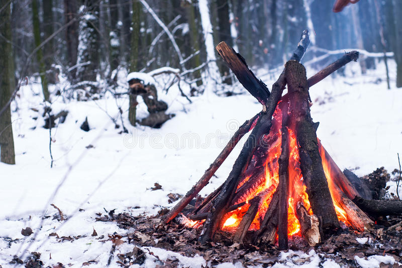Brand i vinterskogen royaltyfri bild
