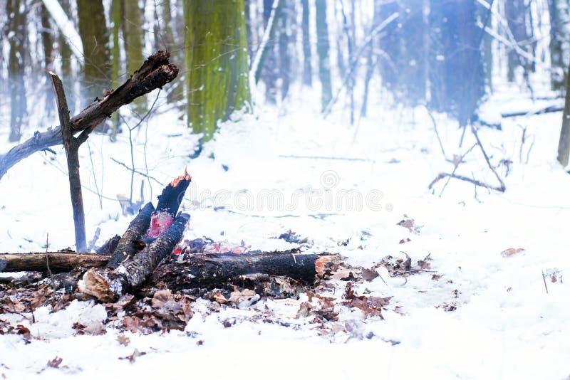 Brand i vinterskogen arkivbilder