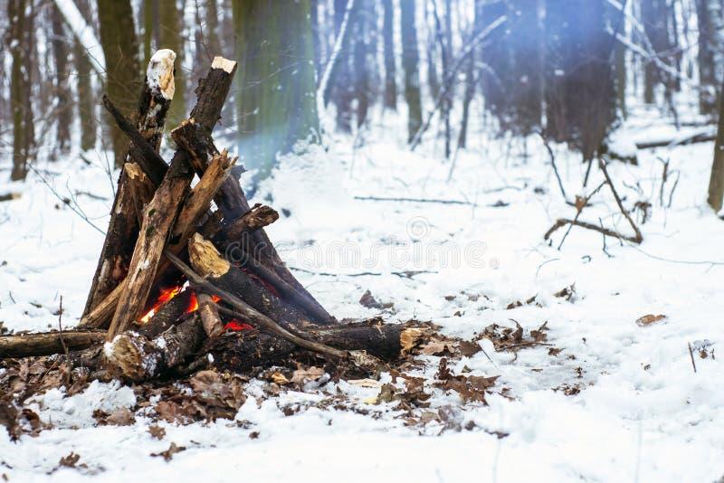 Brand i vinterskogen royaltyfri foto