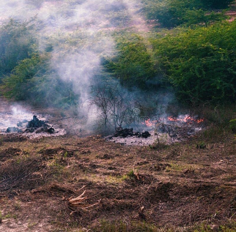 Brand mit Feuersbrunst gerieben in wildem stockfotografie