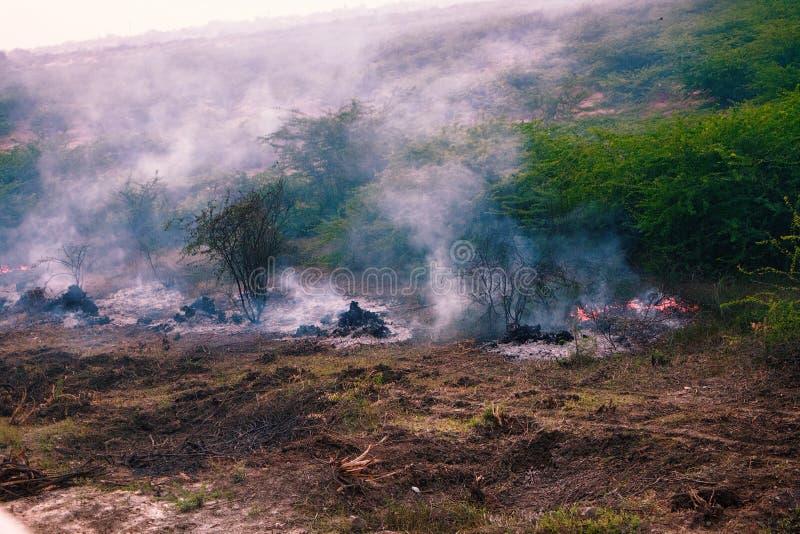 Brand mit Feuersbrunst gerieben in wildem stockfotos