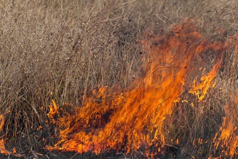 Brand op een gebied stock foto
