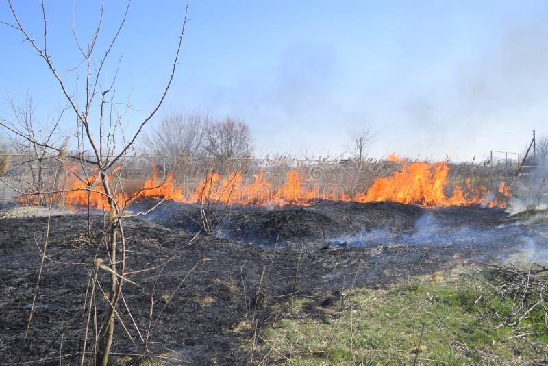 Brand op een perceel van droog gras, het branden van droog gras en riet stock afbeelding