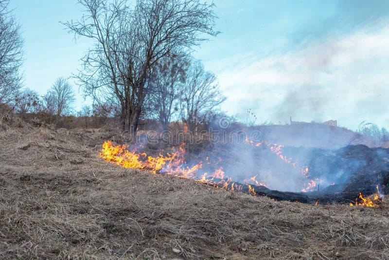 Brand op gebied Het branden van droog gras dichtbij bos na de winter royalty-vrije stock afbeelding