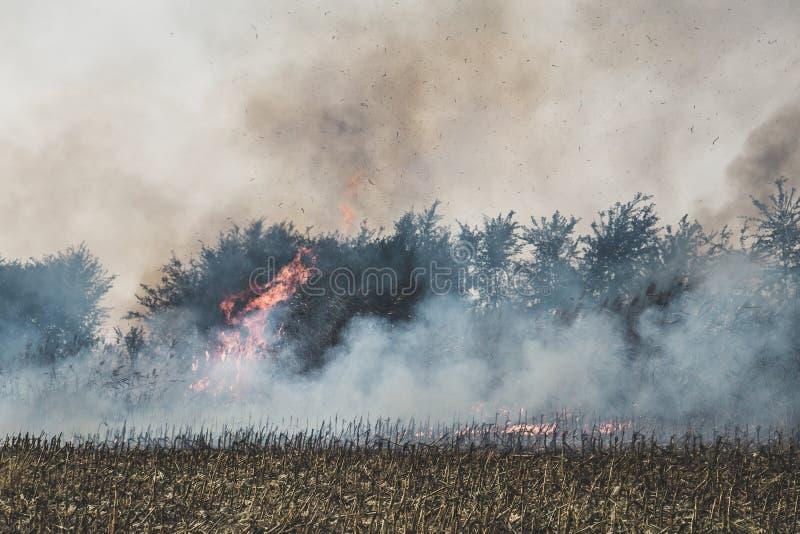 Brand op graangebied dat wordt geplaatst Brandend graangebied na de oogst stock afbeeldingen