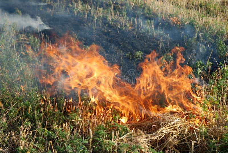 Brand op het droge grasgebied stock afbeeldingen