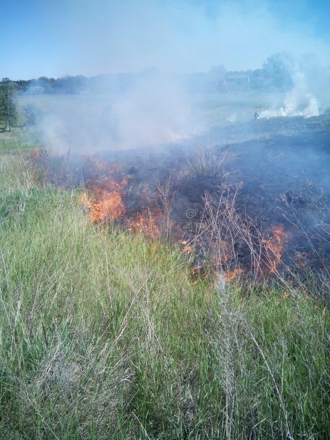 Brand på fältet royaltyfri bild