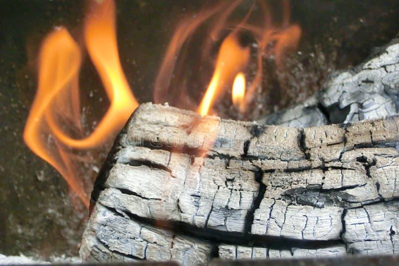 Branden Brännande trädaftonbrasa royaltyfri fotografi